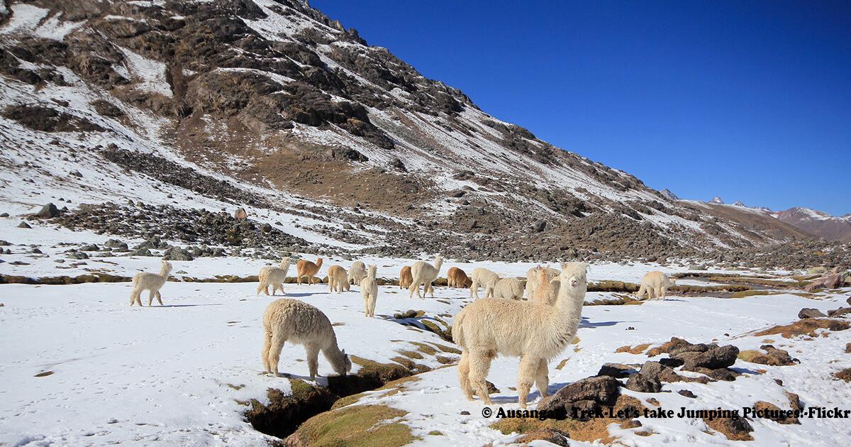 trek-montañas-de-cusco